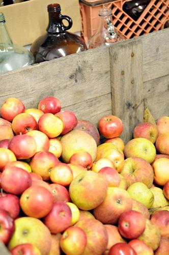 Tandem Cider, hard cider, apple cider, hard apple cider, apples, apple, Michigan, fall, autumn